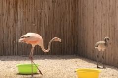 bird-rehab-bonaire